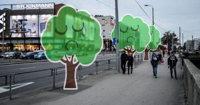 Заботятся ли в Риге о деревьях?