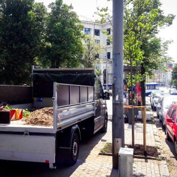 Koku atgriešanās Rīgas tukšajās dobēs