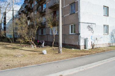 Apzinīgākie ēku iedzīvotāji paši saviem spēkiem labiekārto pagalmus.